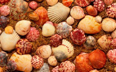 Wind in Shells
